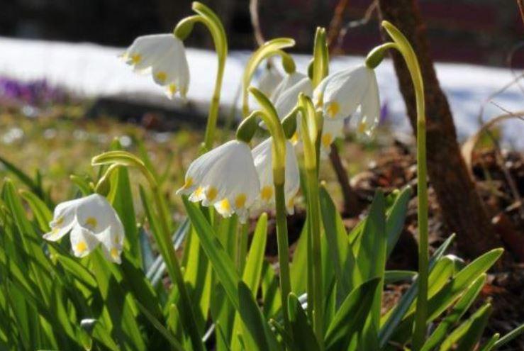Frühjahrsneuigkeiten